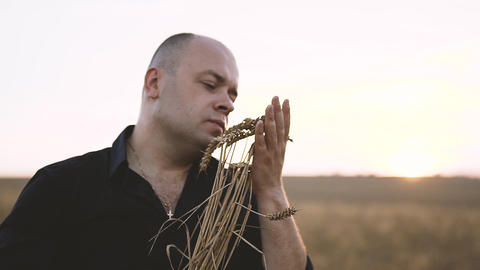 Spikes of Wheat in Men's Hands Footage