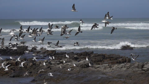 Seagulls flying over sea waves, slow motion Footage