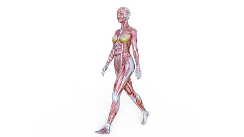 Muscle Female Walk Animation