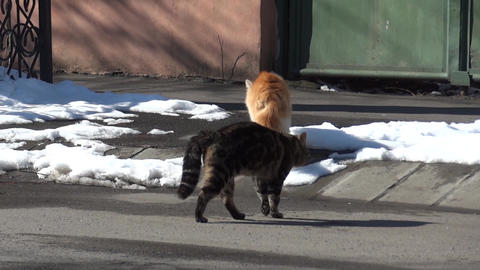 Two cats crossing a street among the snow drifts 9a Footage