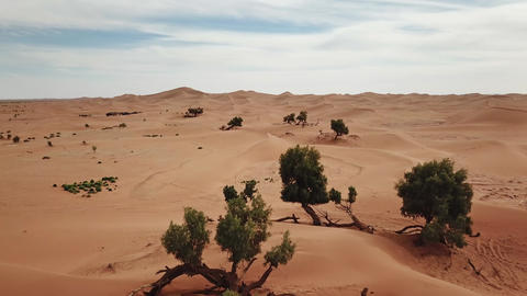 Aerial of sand dunes and trees in Sahara desert Footage