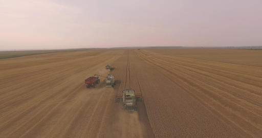 Three Combines Harvest Leaving One by One Live Action