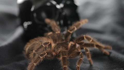 The spider crawls and sits on the skull close up Stock Video Footage