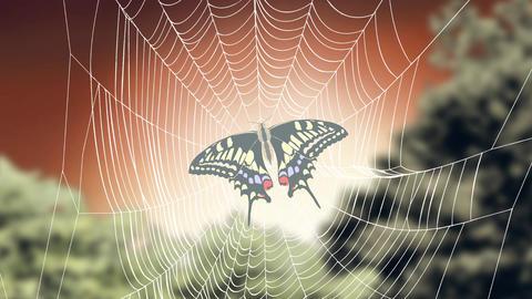 Captive butterfly Animation