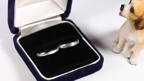 結婚指輪と小犬 Footage