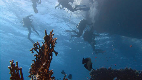 Diving in the Red sea near Egypt. Divers surfacing after a dive right to the gan Live Action
