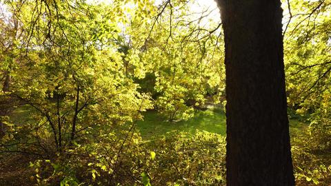 Golden Forrest GIF