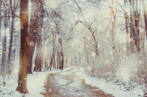 winter park on a sunny day Fotografía