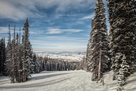Winter snowy landscape with pine trees. Aspen mountain Photo