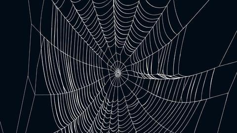 Spiderweb 2 Animation