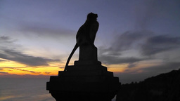 Silhouette of monkey against the evening sky,Uluwatu Temple,Bali Archivo
