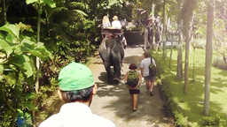 Tourists are on Elephant Tour Bakas,Bali,Indonesia Videos de Stock