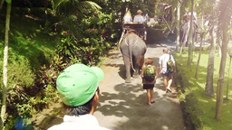 Tourists Are On Elephant Tour Bakas,Bali,Indonesia stock footage