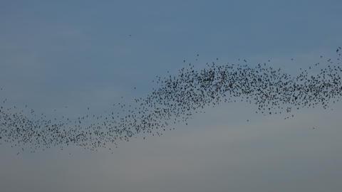 Bat swarm flying on blue sky GIF