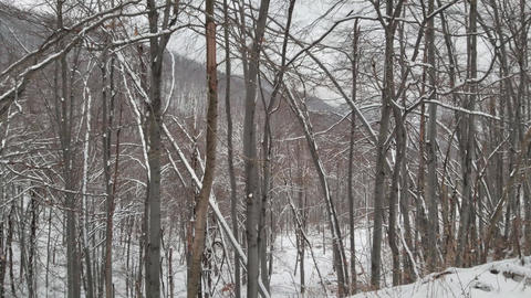 Beautiful Winter Forest. Snow Trees Footage