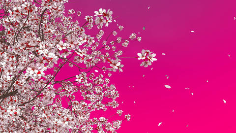 3D sakura cherry tree blossom and falling petals Image