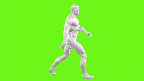 Animation of walking man on green screen. Loopable animation. 4k Animation