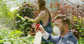 Gardeners spraying plants with chemical Footage