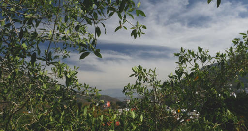 View through leaves looking out a lush mountain valley in the jungle or forest Footage