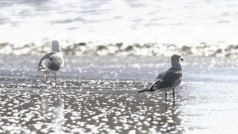 Gulls go near the sea Archivo