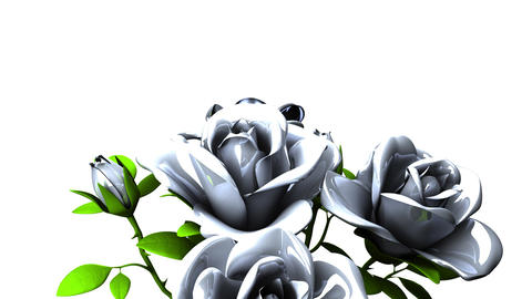 White roses bouquet on white text space Animation