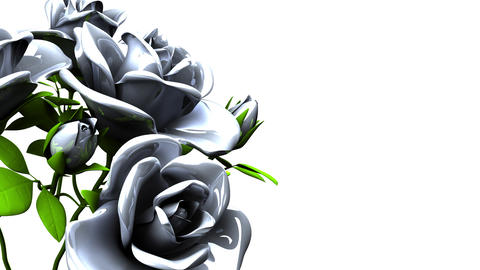 White roses bouquet on white text space CG動画