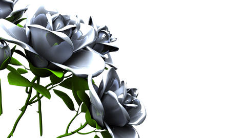White roses bouquet on white text space 動画素材, ムービー映像素材