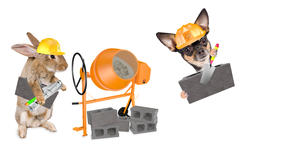 Cute dog chihuahua is after the wall with center block between legs and cute Fotografía