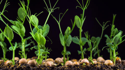 Plant Growth From The Seed 2