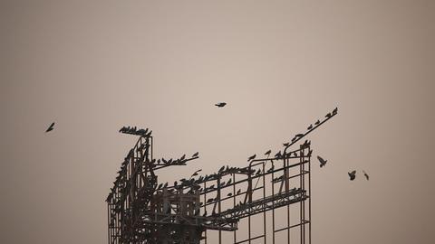 Birds in the sky Footage