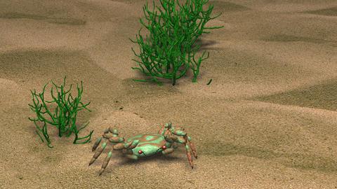 Crab crawling on sand Animation
