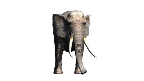Elephant CG動画