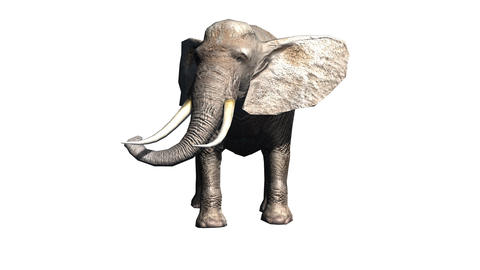 Elephant Animation