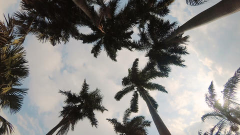 Palm trees swaying in the wind 영상물