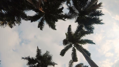 Palm trees swaying in the wind ビデオ