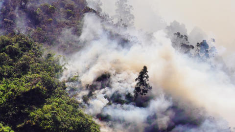 Forest Fire In Mountain Of Ecuador Footage