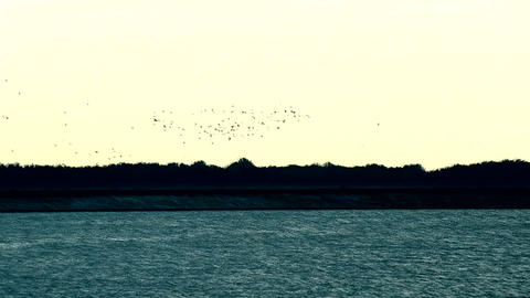 Flock of flying birds above water of lake, river or harbor Footage