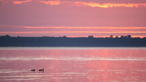 Dawn over river or lake with duck silhouettes on water Footage