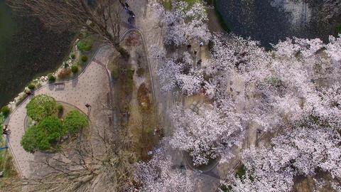 Bomun Pond of Bomun Park at Gyeongju 07 Footage