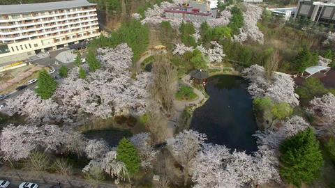 Bomun Pond of Bomun Park at Gyeongju 09 Footage