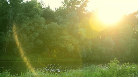 Small lake or river in summer on a sunny day Footage