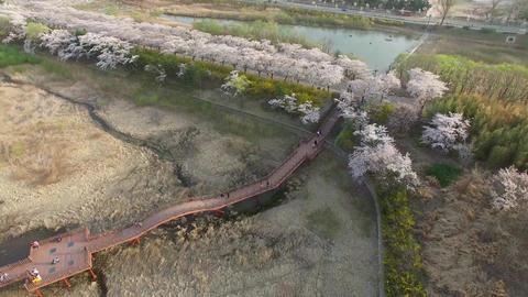 Spring of Bomun Park at Gyeongju 01 Footage