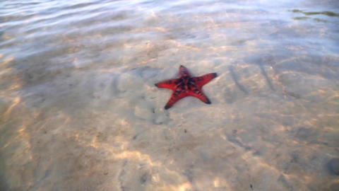 Red Starfish in Clear, Shallow Water Archivo