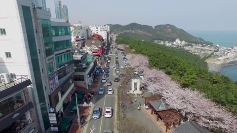 Cherry Blossom Haeundae 1