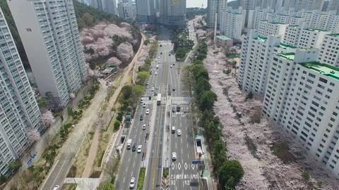 Cherry Brossom Spring Road of Haeundae 03 Footage