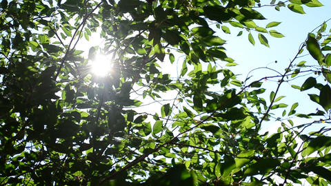 Twinkling sunshine with sun rays coming through foliage Footage