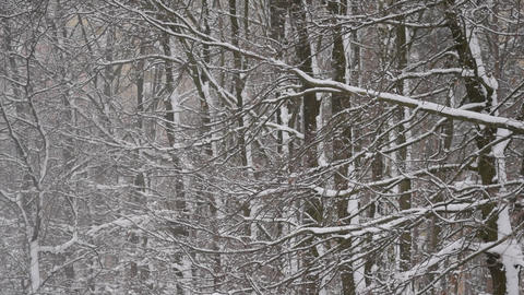 Falling snow in winter on background of a deciduous forest Footage