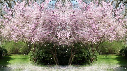 Springtime Garden 0