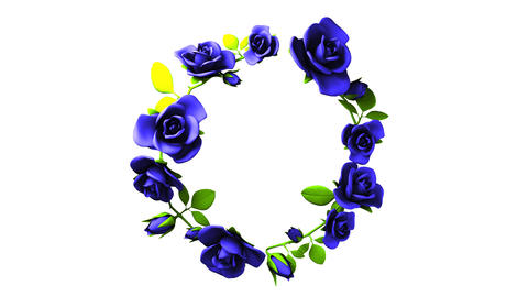 Blue roses frame on white text space, CG動画素材