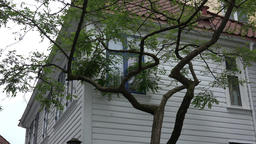 Norway Skuteviken Bergen corner of white Scandinavian house and a tree Image